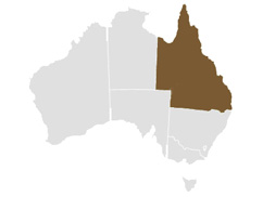 Map of Queensland (QLD) Australia, Includes NSW, VIC, WA